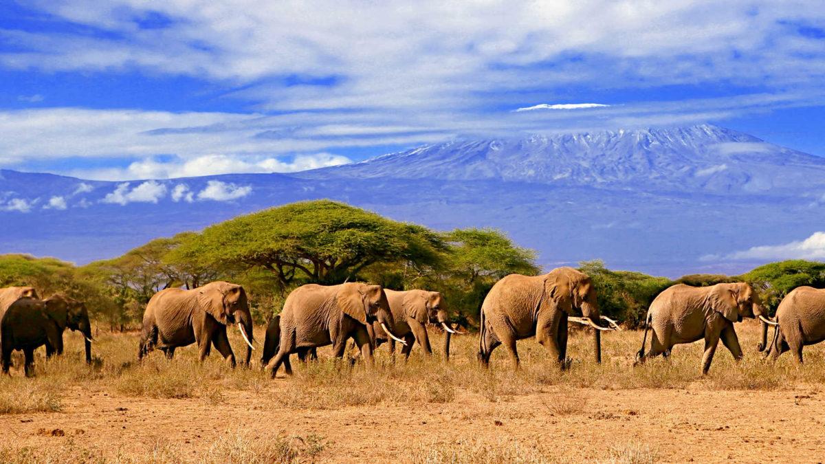 Дешевые авиабилеты в Танзанию