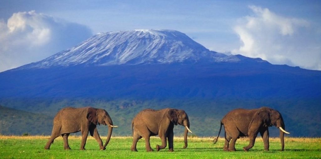 Дешевые авиабилеты Москва - Килиманджаро (Танзания)