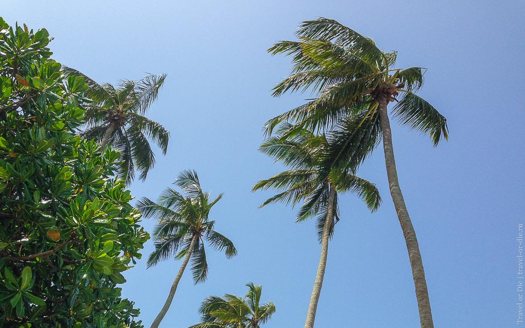 Citrus Hikkaduwa 4*, пальмы