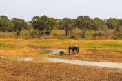 сафари в парк Яла национальный парк яла