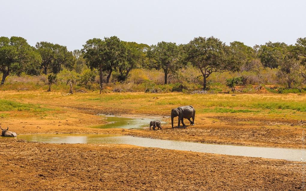 сафари в яла парк национальный парк яла