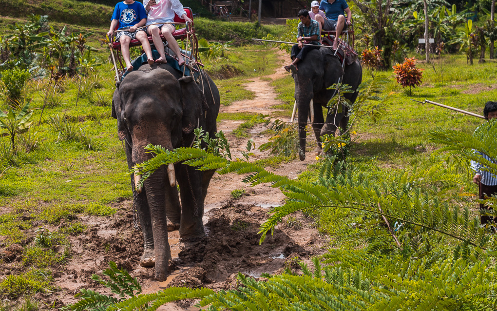 Сафари на слонах Као Лак экскурсия.