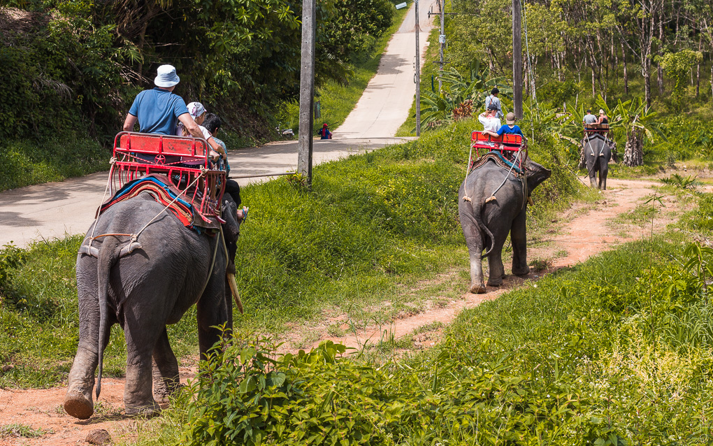 Сафари на слонах Као Лак экскурсия