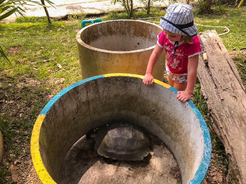 экскурсия в Као Лак черепахи