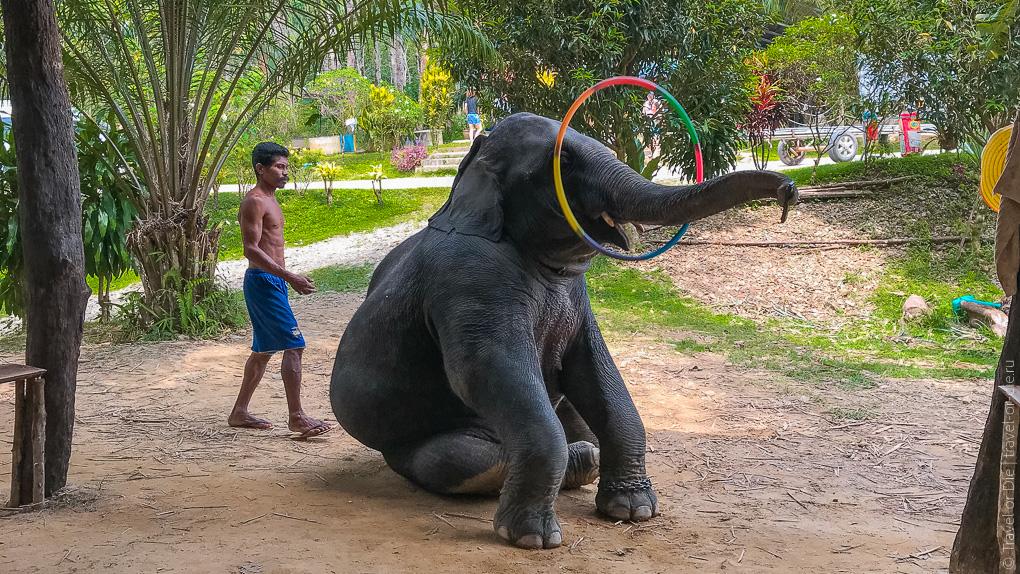 экскурсия в Као Лак шоу со слонами