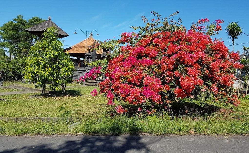 вулкан агунг 14