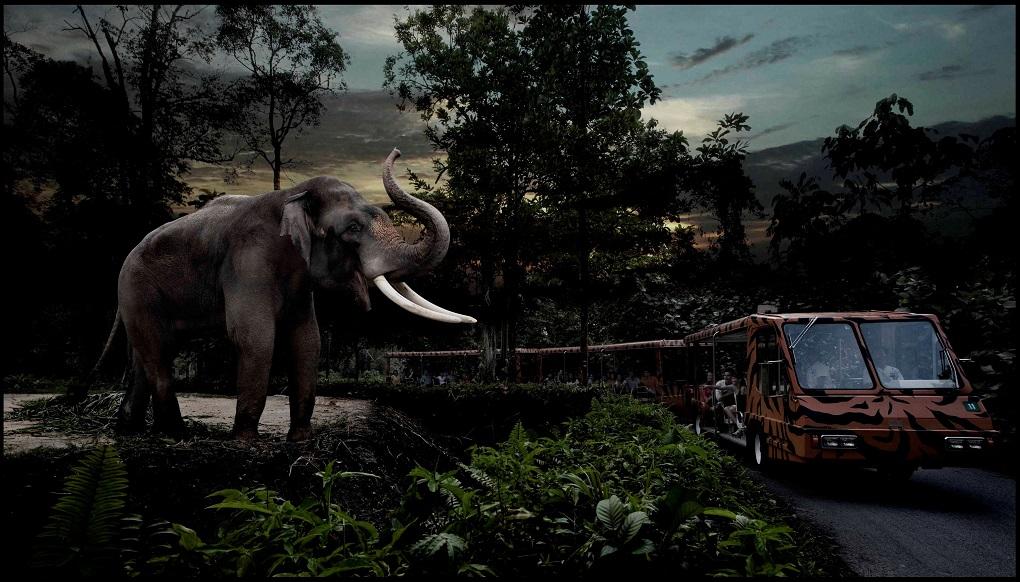 Экскурсия сафари в Сингапуре