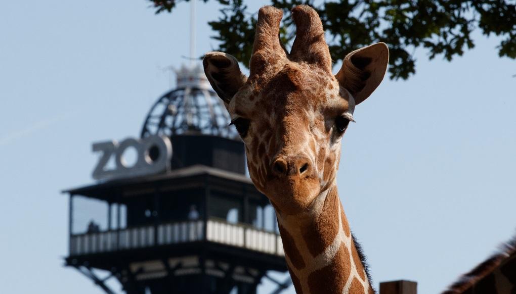 Достопримечательности Копенгагена - Копенгагский зоопарк
