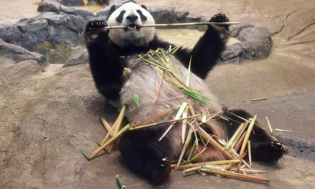 Достопримечательности Токио - Зоопарк Уэно