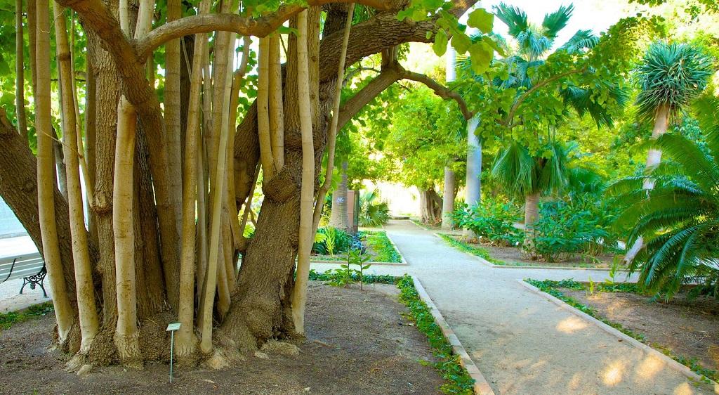 Достопримечательности Валенсии - Ботанический сад