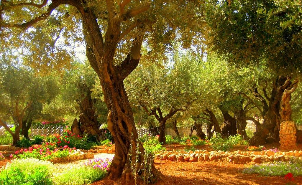 Достопримечательности Иерусалима - Гефсиманский сад