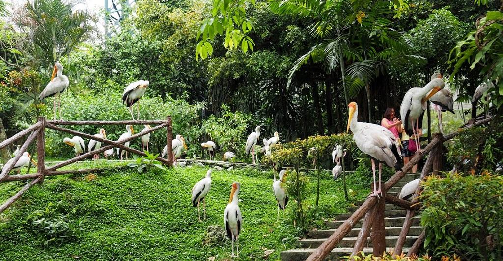 Достопримечательности Куала-Лумпура - Куала-лумпурский парк птиц