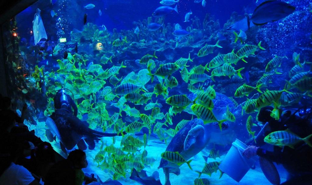 Достопримечательности Куала-Лумпура - Океанариум Aquaria KLCC