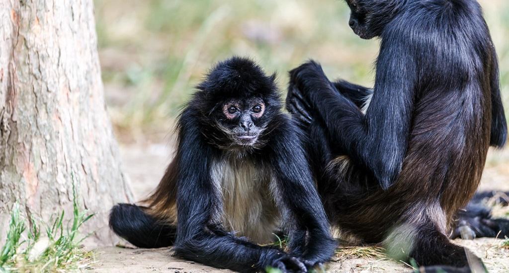 Достопримечательности Праги - Пражский зоопарк