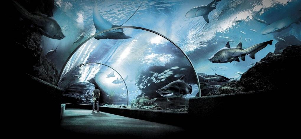 Достопримечательности Бангкока - Аквариум Siam Ocean World