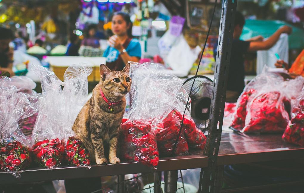 Достопримечательности Бангкока - Рынок цветов Pak Khlong Talat