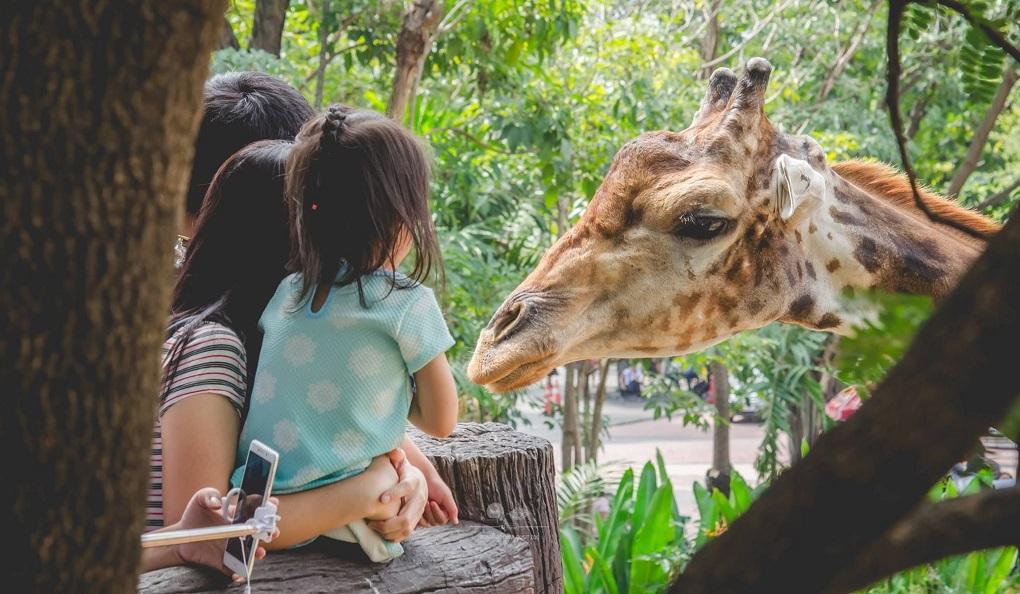 Достопримечательности Бангкока - Зоопарк Dusit Zoo