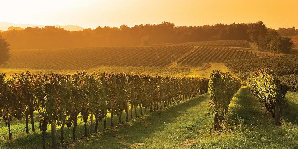Экскурсии на виноградники из Бордо