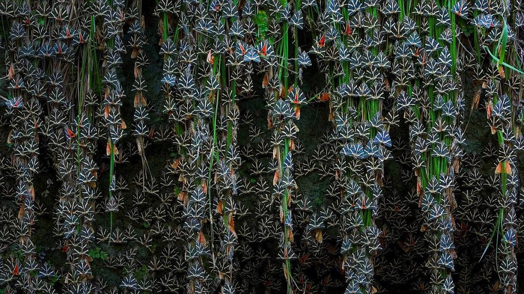 Долина бабочек на острове Родос