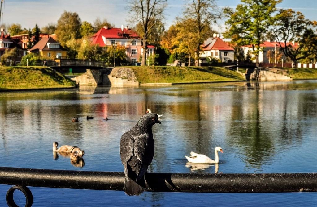 Экскурсии в старый город Калининграда – район Амалиенау