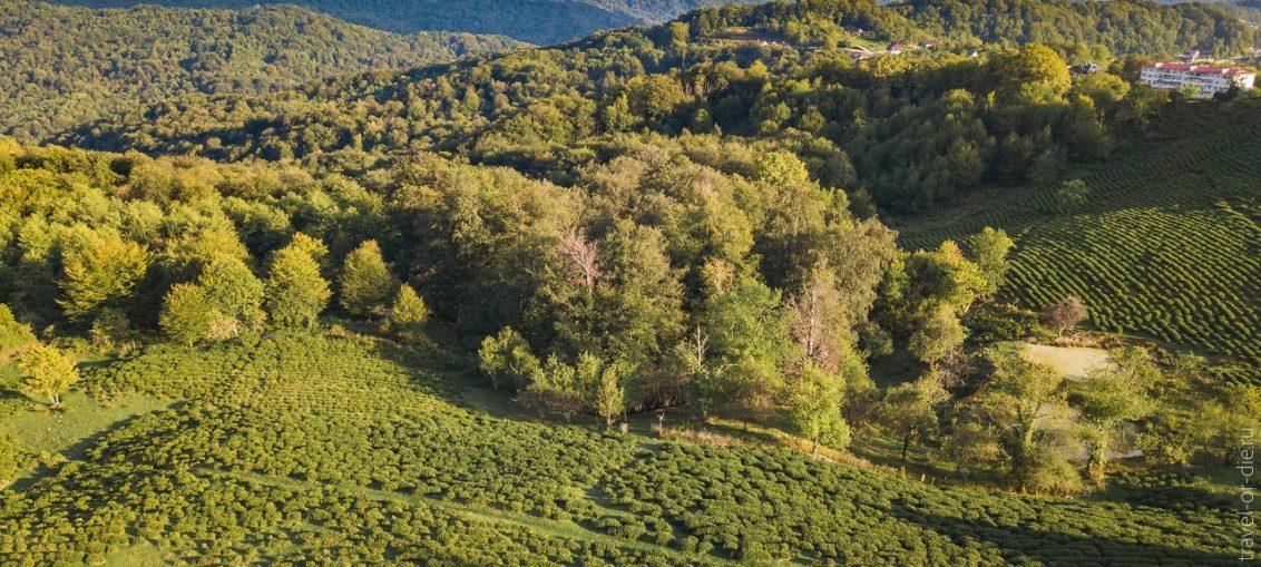 Экскурсии на чайные плантации в Сочи - фабрика Мацеста и Солох-Аул