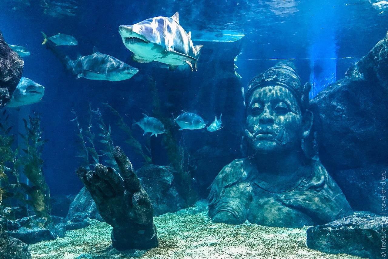 Океанариум в Бангкоке siam sea life ocean world bangkok