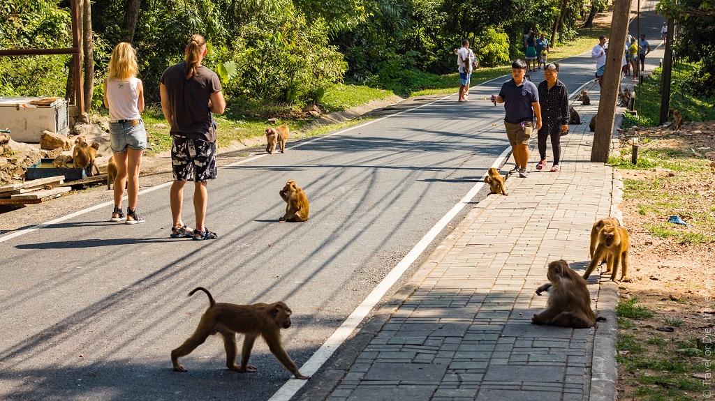 достопримечательности пхукета гора обезьян