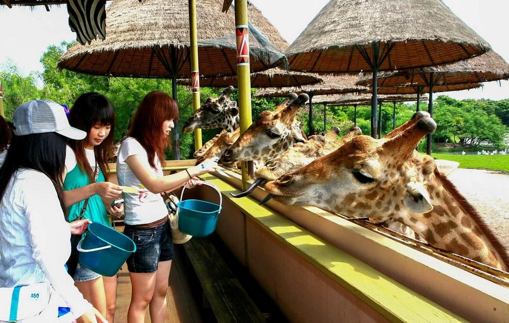 safari world bangkok кормежка жирафов