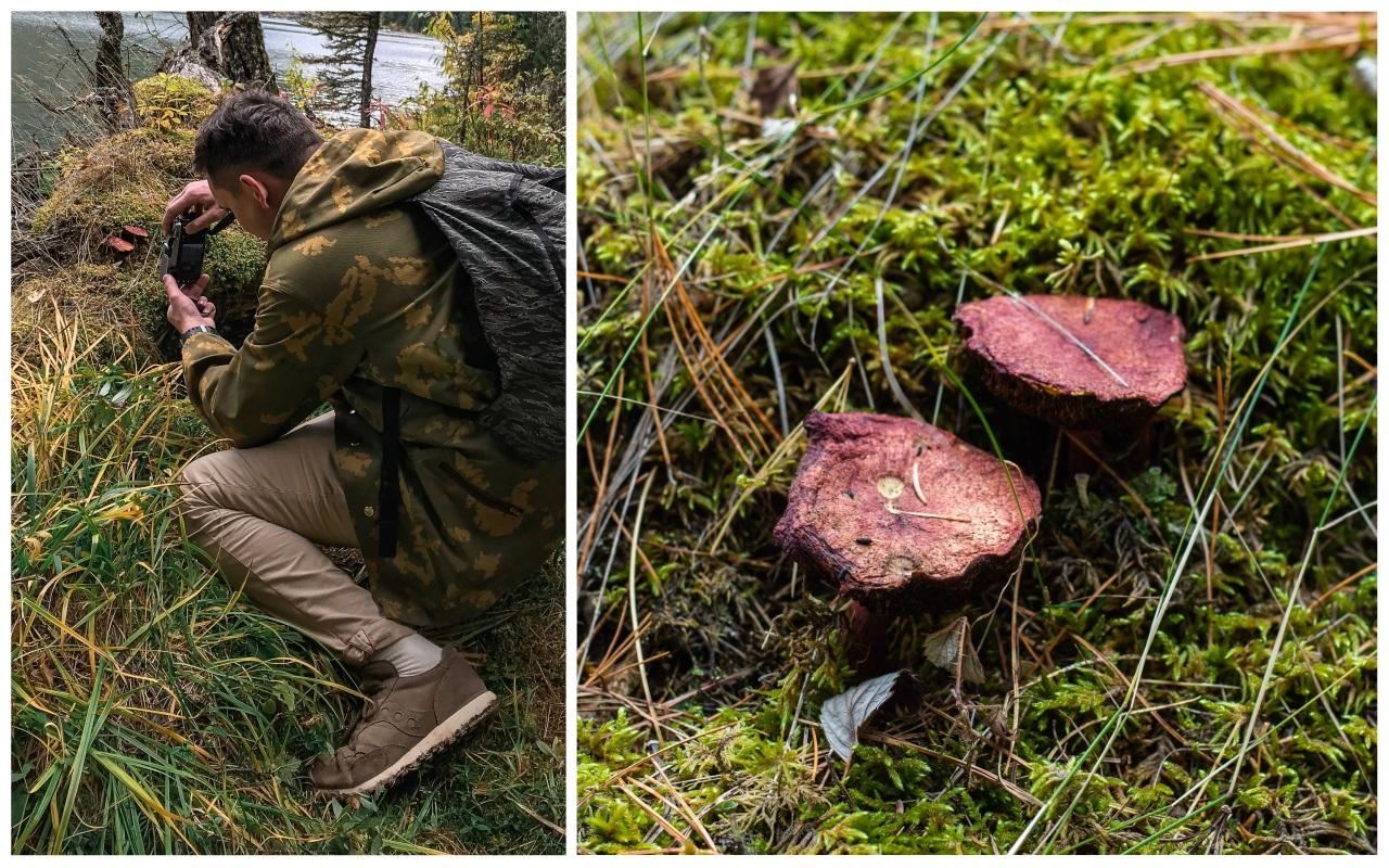 мультинские озера грибы
