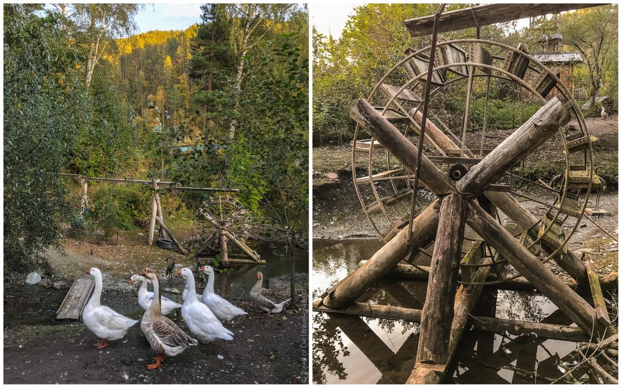 сад пионов водяная мельница