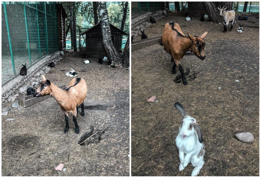 зоопарк турсиб