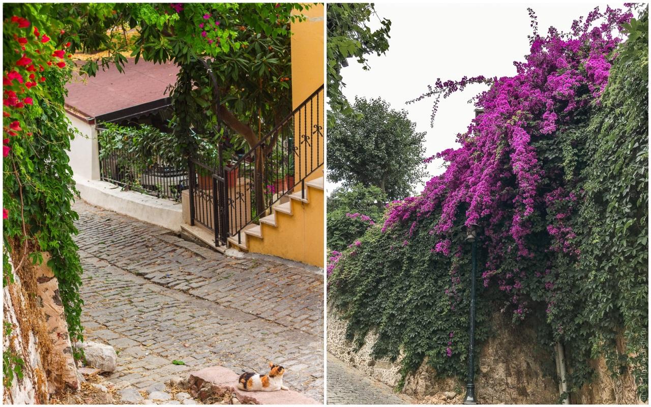 крепость в алании турция растения цветы