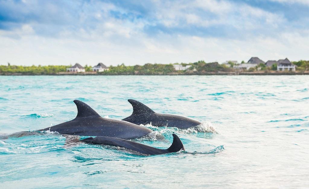 Экскурсии с дельфинами на Занзибаре