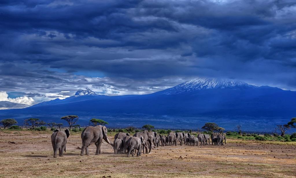 Экскурсия из Занзибара на Килиманджаро