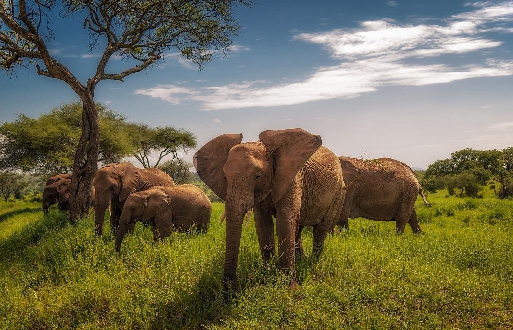 Экскурсия-сафари с Занзибара в Танзанию