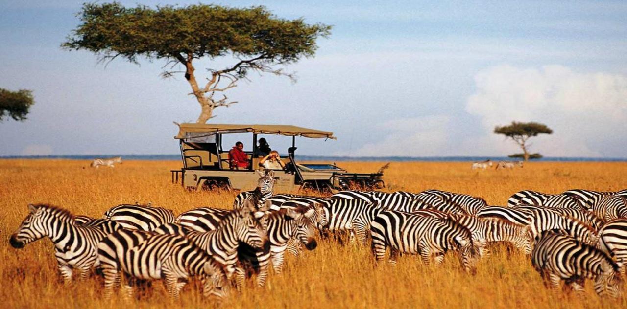 Где купить сафари в Танзании на материк