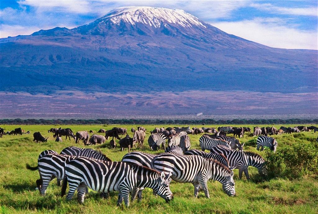 Сафари из Занзибара на Килиманджаро на 3 дня