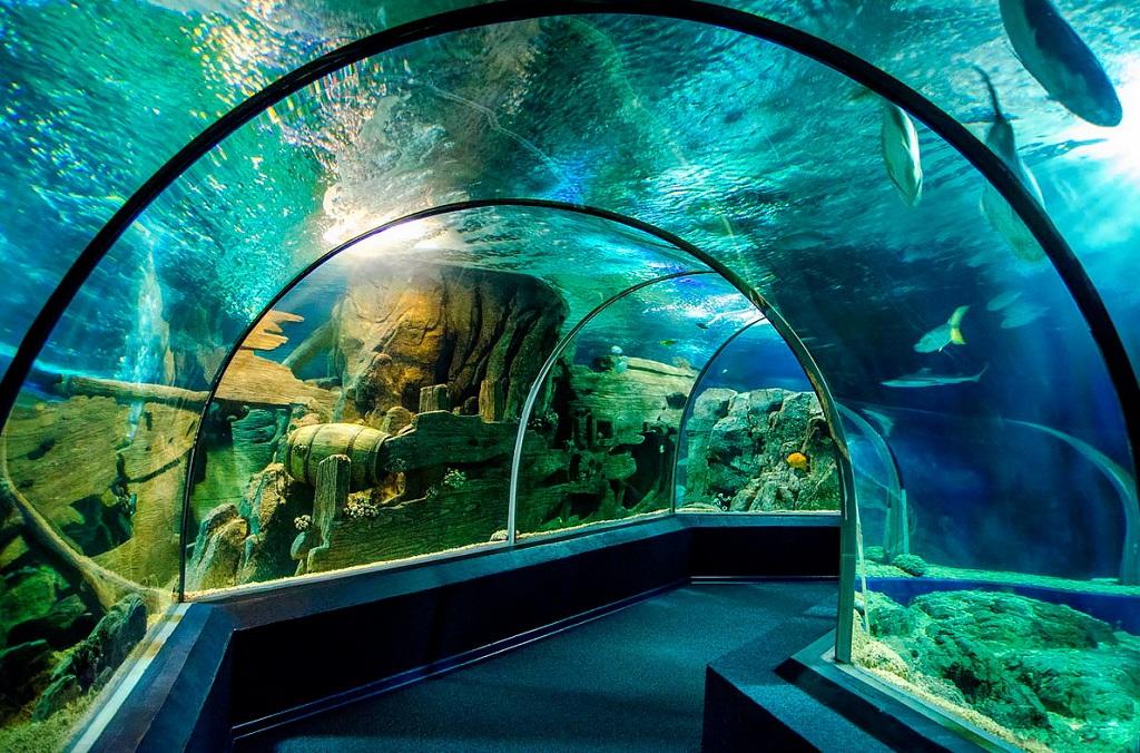 Достопримечательности адлера - Sochi Discovery World Aquarium