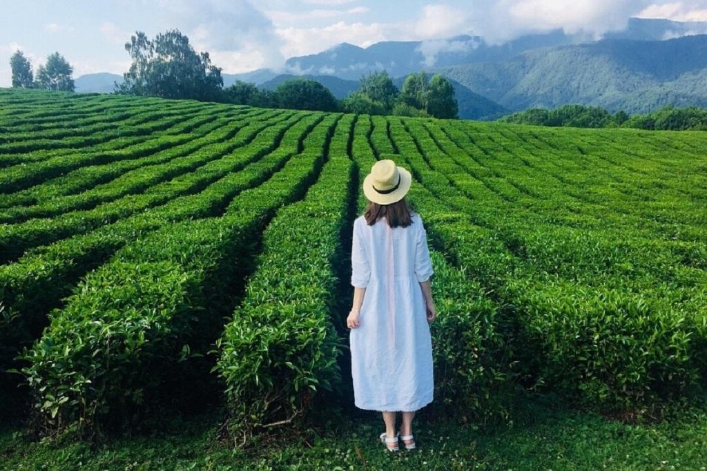 фотосессии в сочи - чайные плантации шахе