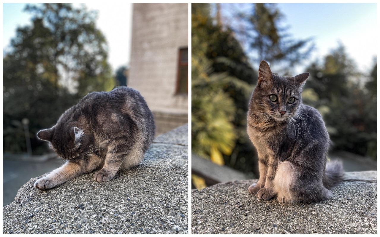 санаторий орджоникидзе сочи кот
